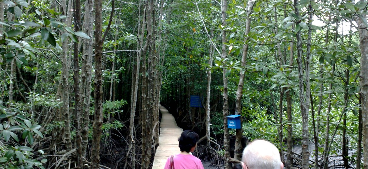 Mandrove_Trail_at_Peam_Krasop_Wildlife_Sanctuary.jpg