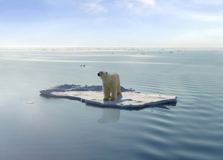 polar-bears-global-warming-1.jpg